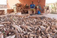 Man carving bone behind a pile of cow horns