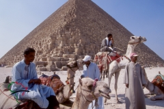 Men with camels in front of the Great Pyramids of Giza