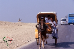 Horse drawn carriage driving in Cairo