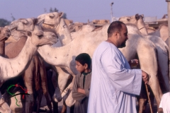 Herders at the Birqash Camel Market
