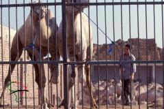 Boy at the Birqash Camel Market