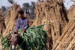 Boy riding a donkey in Komlolah