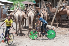 Children riding bicycles in front of camels