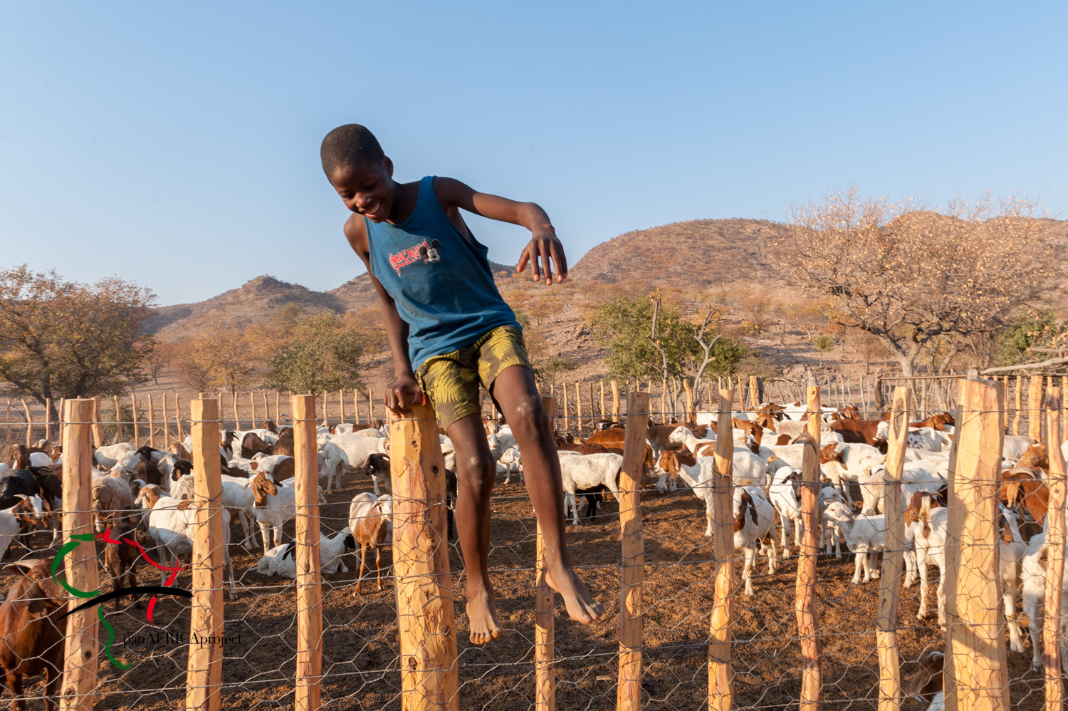 Child climbing over a fence with goats in the background.
