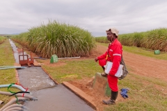 Worker at the Samunye sugar estate