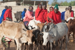 People from the Maasai tribe with cattle