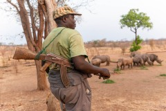 Armed guard watches over a crash of rhinos