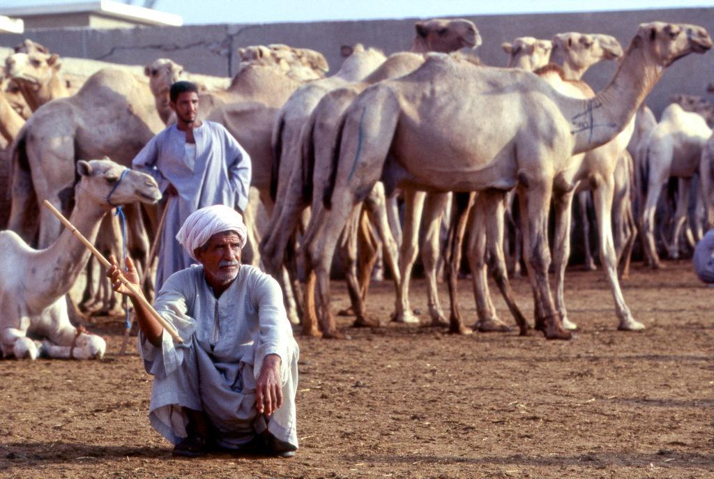 Herder sitting at the Birqash Camel Market